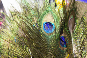 Beautiful exotic peacock feathers