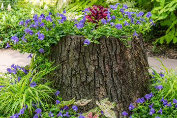 A tree stump being used as a planter for annuals