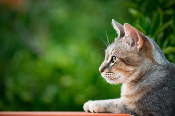 Cat profile with green vegetation background - copy space on the left