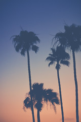 Purple Orange Sunset Sky with Palm Trees