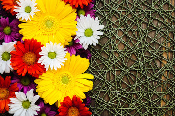 Spring Mix of Daisies on Textured Table