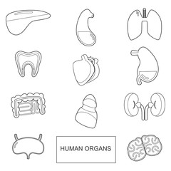 Human organs in outline style. Vector icons set isolate on white background