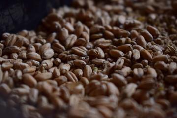 Wheat texture