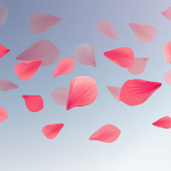 Petals Roses Flowers. Red Sakura flying petals isolated on Blue gradient transparent background. Vector