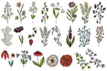 Set of floral elements for design.Isolated flowers, grass, bushes, leaves on a white background.