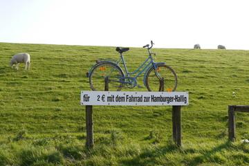 Mit dem Rad zur Hamburger Hallig