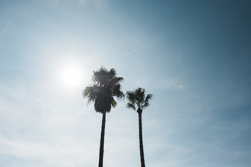 Palm Trees against the sun