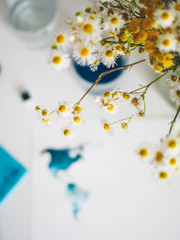 Yellow camomile and watercolor painting on a white table