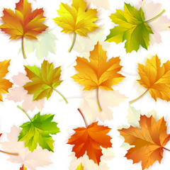 Vector illustration of a repeating pattern of maple autumn leaves