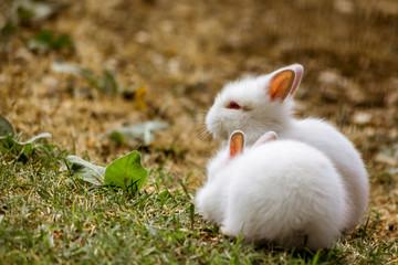 Cuddling Bunnies