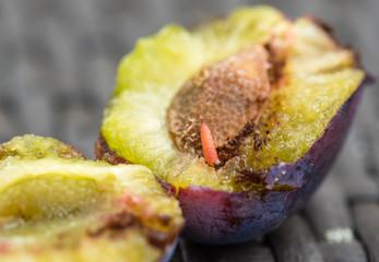 Pflaumenwickler in frisch gepflückter Pflaume