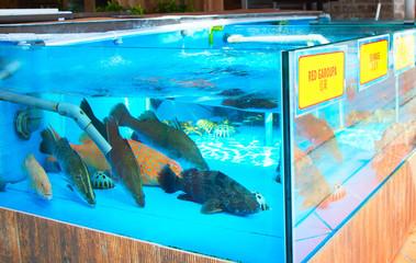 Fish aquarium at restaurant