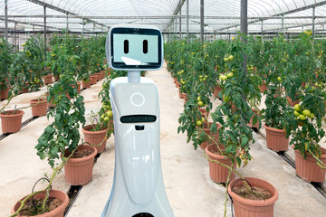 Smart agriculture , robotics Trends technology and robo advisor concept. Robot assistant in smart farm.
