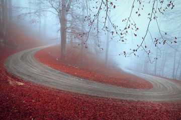 Wall Mural - Magic autumn season foggy winding forest road with red leaves on the ground.