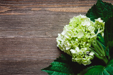 Hydrangea on Rustic Wooden Table
