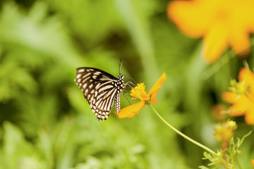 its a butterfly with flower.