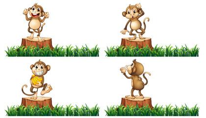 Happy monkeys on the stump trees