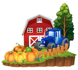 Farm scene with blue tractor and pumpkins