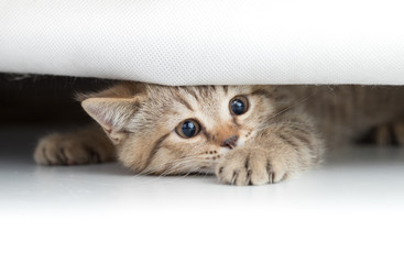 Papier Peint - Funny cat looking from under small hole isolated