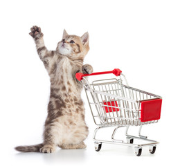 Funny cat standing with shopping cart isolated