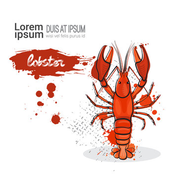 Lobster Hand Drawn Watercolor Sea Food On White Background With Copy Space Vector Illustration