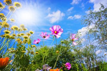 Bunte Blumen und blauer Himmel im Sommer
