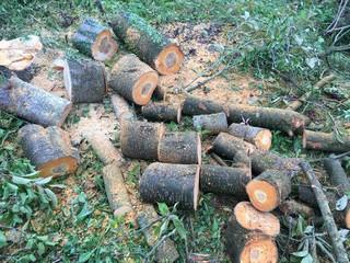 Brennholz für Kamin