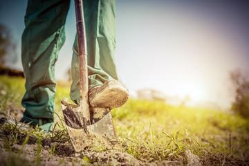 Fototapeta Gardener digging in a garden with a shovel.