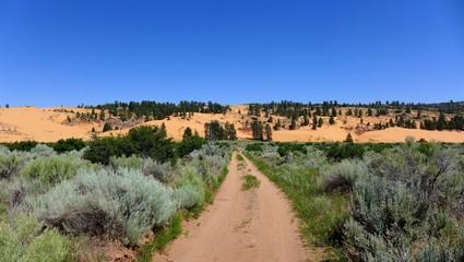 Weg durch eine Wüstenlandschaft in Utah
