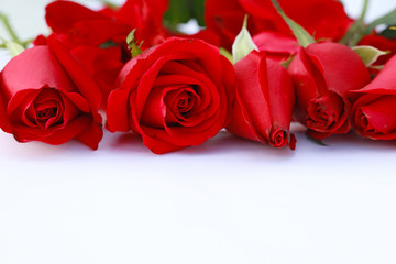 Red rose on white table and white background. Red rose for valentine day.