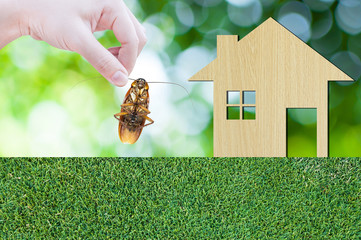 Woman's Hand holding cockroach on house icon from  wooden on grass texture nature background as symbol of eliminate cockroach in apartment and house