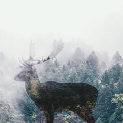 Multiple exposures of forest animals: Deer