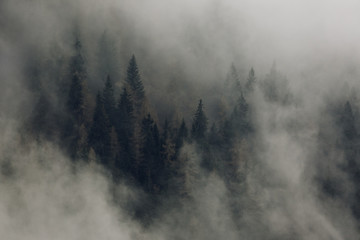 Mountain forest in the morning Mist