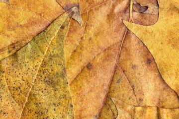 Autumn Foliage Background Grunge Texture