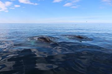 Couple de baleines