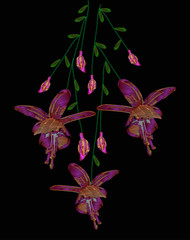 Beautiful lilac flowers fuchsia. Embroidery of jeans. Embroidery is smooth. Vector illustration on a black background.