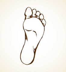 Foot. Vector drawing