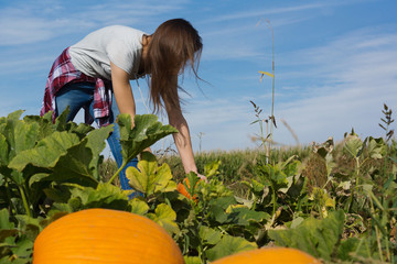 teenager searching for pumpkin in pumpkin patch