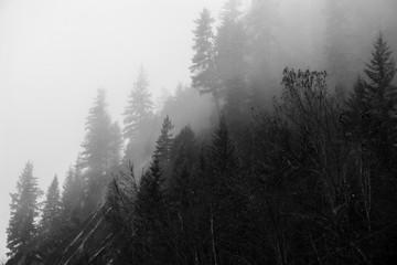 Gradient Forest