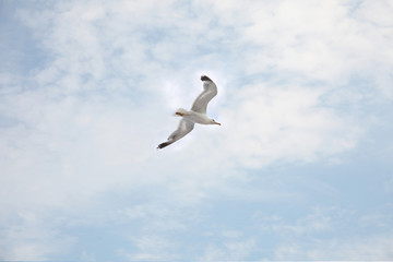 Seagull flying on sky background with clouds