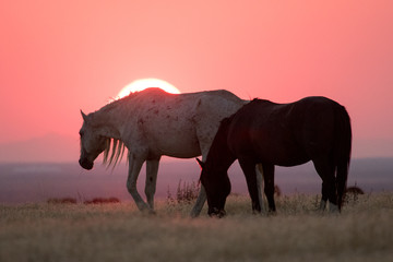 Wild horses with crimson sunset along Pony Express