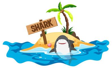 Shark swimming at sea