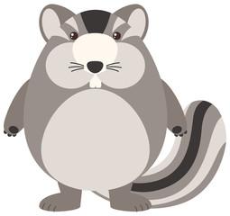 Fat chipmunk on white background