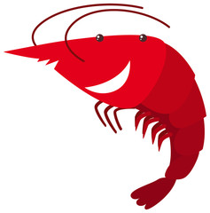 Red shrimp on white background