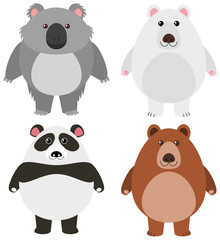 Different kinds of bears on white background