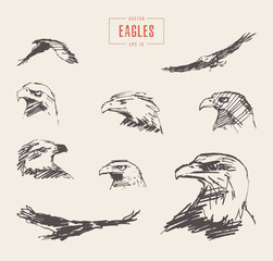 Set realistic eagles hand drawn vector sketch