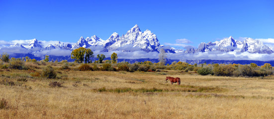 Panorama of Lone horse in the Rocky Mountains, Grand Teton National Park, Wyoming, USA