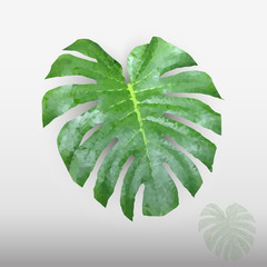 Green leaf in low poly style, plant Monstera Deliciosa, Swiss Cheese Plant, holes natural botanical leaf on a grey background.