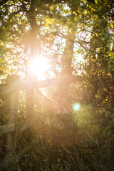 hedgerow sunrise