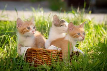 Three curious beautiful kittens
